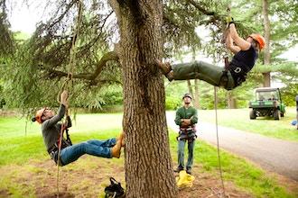 Tree Climbing for Arborists