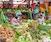 Exploring Vanuatu: Plants, People & Traditional Culture