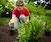 Whip Your Garden into Shape
