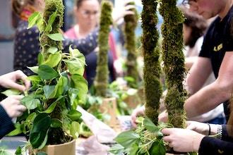 Moss Pole & Vining Workshop