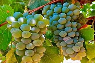 Spanish Wine Fundamentals & Wines of Rioja