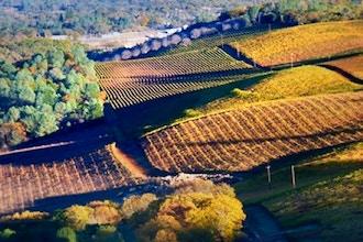 Intro to California Wines