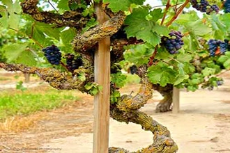 Warm Climate Wines of the World