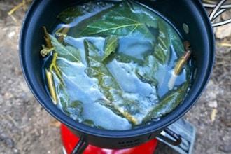 Plant Medicine: Wildcrafting Herbal Medicine