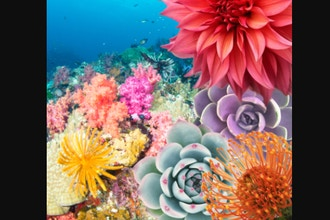 Virtual Floral Art: Oceana