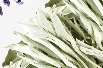 Virtual Floral Art: White Sage