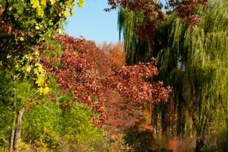 Central Park East Fall Colors Workshop