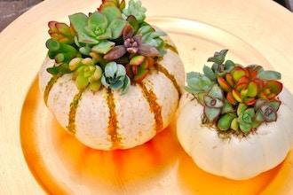 Succulent Pumpkins & Floral Pumpkins Decor
