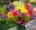 Floral Design Sampler Course