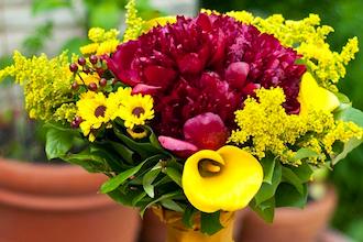 Flower Design Star - 1 Week Comprehensive