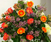 Introduction to Flower Design