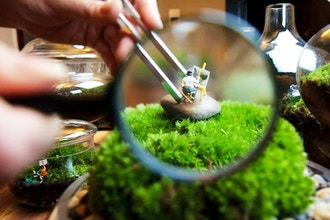 Group Moss Terrarium-Making Workshop