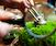 Group Moss Terrarium-Making Workshop