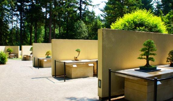 Pacific Bonsai Museum Life Skills Schools Seattle Coursehorse