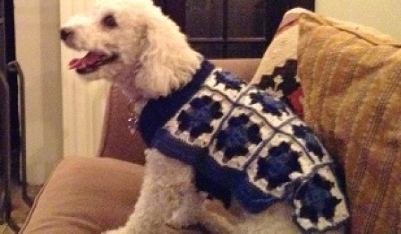 Crocheted Dog Sweater Crochet Classes Los Angeles Coursehorse
