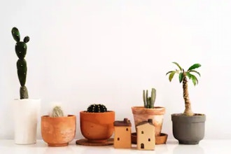 Terracotta Planter Workshop Holiday Special