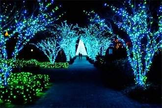 Atlanta Botanical Garden Lights Photo Stroll On Location