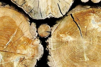 Into the Woods: Creating Wood Based Natural Perfume
