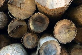 Creating Wood Based Natural Perfume