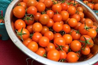 Tomato Mania