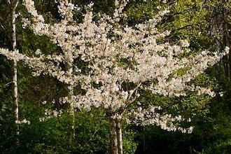 Tree Pruning I