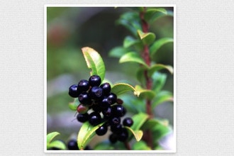 Native Plants 101: Edible Native Plants