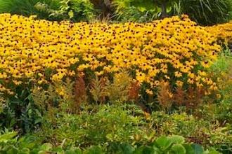 Native Plants 101: Pollinator Pathways