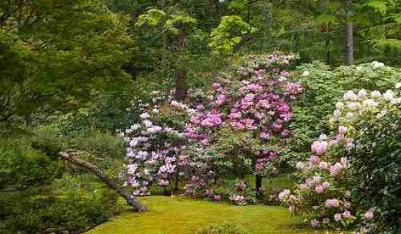 Japanese Garden Pruning