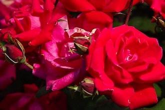 Evening Craft: Botanical Aromatherapy