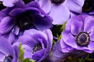 Flower Therapy: Floral Design Workshop in Ultra Violet
