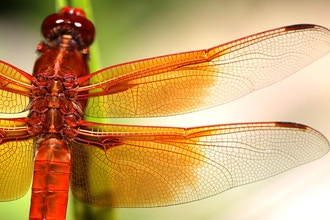 Biomimicry in the Field: Learning from Nature's Genius