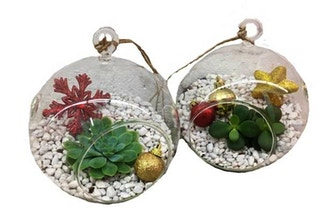 Plant Nite: 2 Holiday Hanging Globes