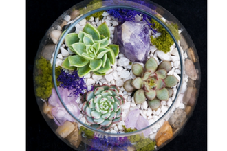 Plant Nite: Amethyst in Rose Bowl