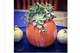 Plant Nite: Craft Pumpkin Succulent Garden (Ages 13+)