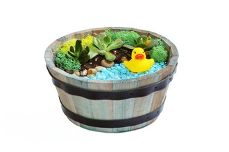 Plant Nite: Duck Pond in Wooden Barrel (Ages 6+)