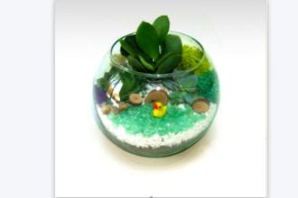 Plant Nite: Duckie Pond - Rose Bowl