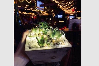 Plant Nite: Fairy Lights in Wooden Container