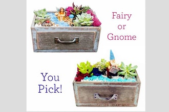 Virtual Plant Nite: You Pick: Fairy or Gnome Succulent