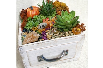 Virtual Plant Nite: Fall Drawer of Succulents(Ages 13+)