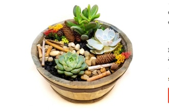 Plant Nite: Fall Succulent Barrel