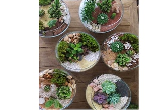 Plant Nite: Glass Succulent Bowls - Create One