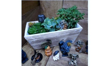 Plant Nite: Halloween Themed Fairy Garden