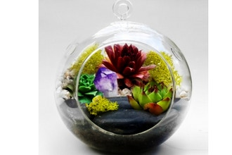 Plant Nite: Hanging Glass Globe w/ Large Black Rocks