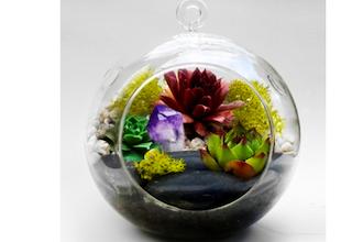 Plant Nite Hanging Glass Globe W Large Black Rocks Terrarium