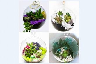 Plant Nite: Hanging Orb - Pick Your Design