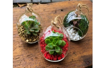 Plant Nite: Holiday Succulent Ornaments - Set of 3