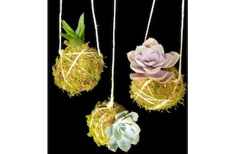 Plant Nite: Moss & Twine Hanging Succulent (Ages 13+)