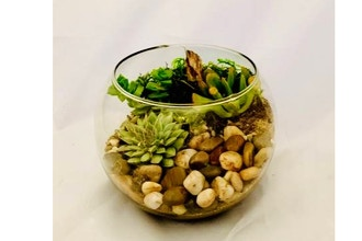 Plant Nite: Create Your Own Nature Bowl