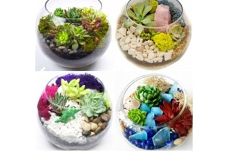 Plant Nite: Pick Your Design Succulent Garden(Ages 18+)