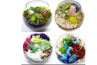 Plant Nite: Pick Your Design Succulent Garden